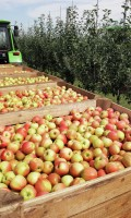 Закупка яблок